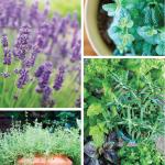 Superb Herbs