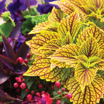 All Season Long   Annuals Make Gardening Easy
