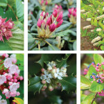 Plant Smart, Plant Local | Native Shrubs that Thrive At Smithmountain Lake